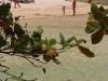 """Nai Harn Beach / Phuket a Giugno - luglio - agosto """"Alla faccia della bassa stagione photo session"""" © Phuket-Vacanze.it, PH. Monica Costa   LAD"""