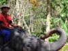Elephant Treking / Passeggiata sugli elefanti, © Phuket-Vacanze.it, PH. Monica Costa | LAD